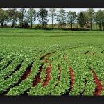 Promerica puso a disposición crédito para sector agropecuario