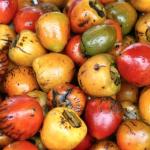 INA e ICT lanzan talleres de capacitación en gastronomía costarricense