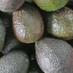 Aguacate nacional y de Perú no tienen capacidad de abastecer mercado nacional