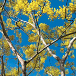 Emprendimiento social de los hermanos Pucci busca desarrollar programas de reforestación