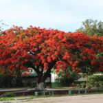 App para móviles le ayudará a identificar árboles por el  color de sus flores