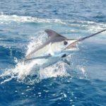 Convenio con Universidad de EEUU permitirá analizar el potencial del país en temas de pesca deportiva