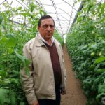Cartagineses producen al mes 20.000 kgs de tomate hidropónico para venderle a McDonald's