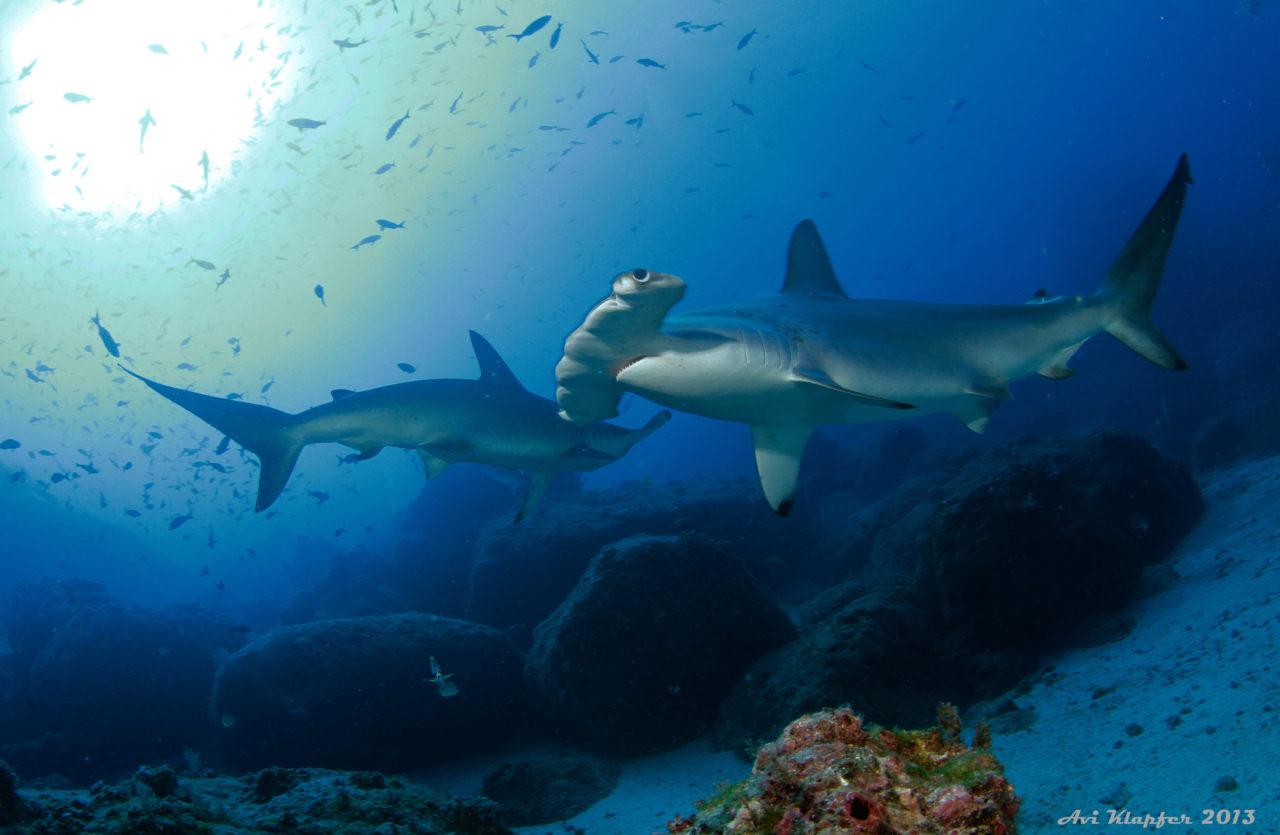 https://ekaenlinea.com/wp-content/uploads/2019/07/Undersea-Hunter-2154-1280x835.jpg