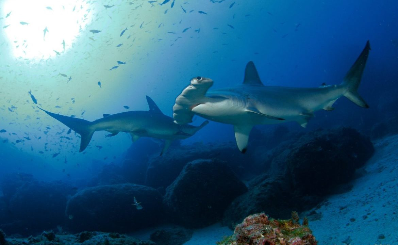 https://www.ekaenlinea.com/wp-content/uploads/2019/10/Undersea-Hunter-2154-1170x720.jpg