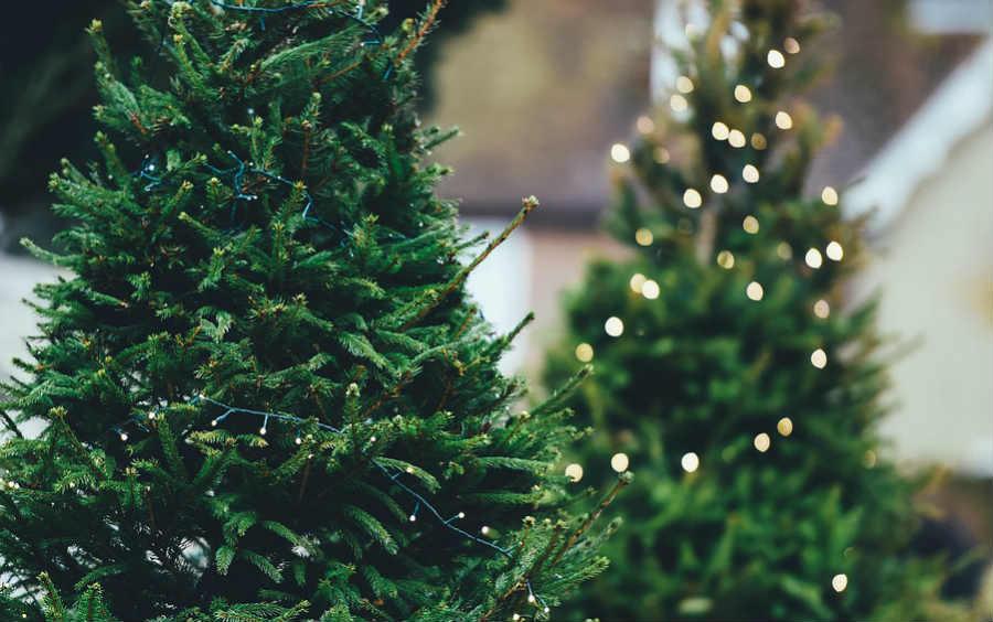 13 Municipalidades recolectarán árboles de Navidad: conozca las fechas de la campaña