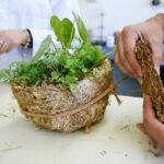 Empresa desarrolla productos biodegradables con residuos orgánicos y hongos