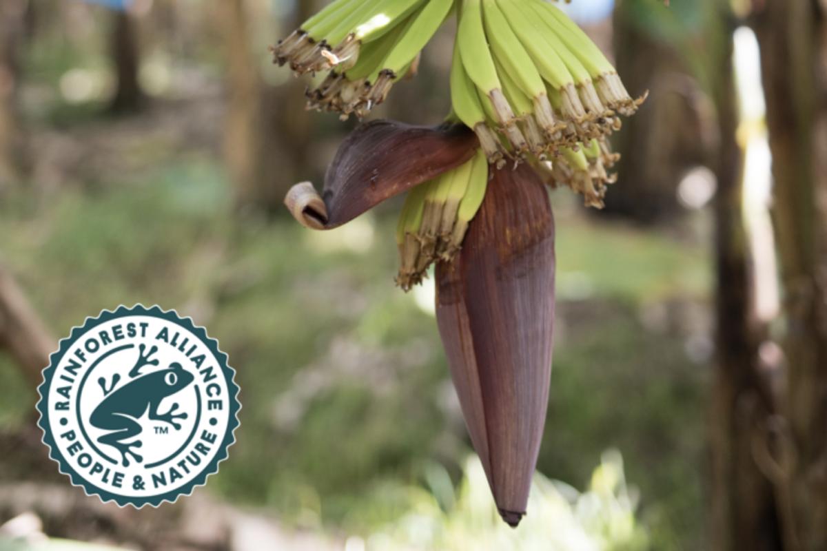 Nueva Certificación de Rainforest Alliance